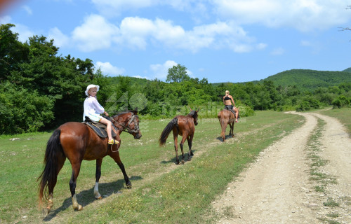 Индивидуальные конные прогулки