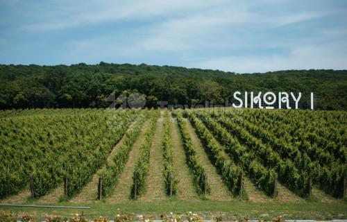 Секреты виноделия Сикорских