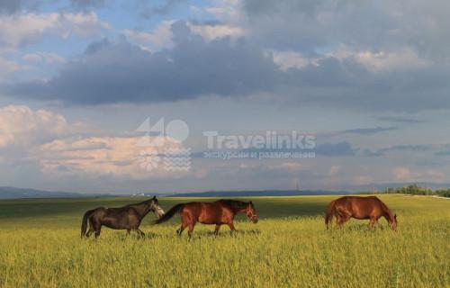 Конные прогулки в долине Сукко