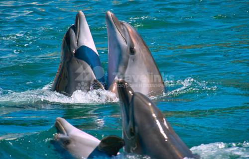 Дельфинарий Большого Утриша